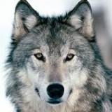 Avatar clawdeenwolf009