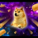 Avatar Davido_the_Doge_God