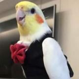 Avatar Polskipapug