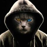 Avatar Hermiona_Granger98