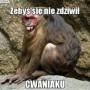Avatar PanMarchewka888
