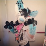 Avatar furry_candy_husky_