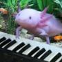 Avatar Axolotl_3
