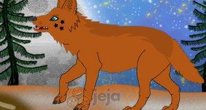 Piękny wilk