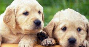 Puzzle ze zwierzątkami