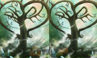 Drzewa - różnice