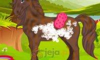 Zadbaj o konia