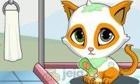 Pielęgnowanie kotka