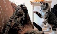 Kot Simona w prawdziwym życiu