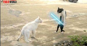 Nie zadzieraj z kotem Jedi