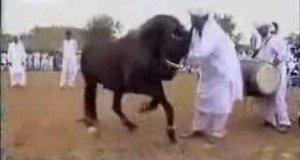 Tańczący koń