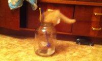 Kocia szklana pułapka