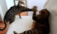 Kot Nikita atakuje