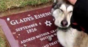 Pies płacze nad grobem swojej właścicielki
