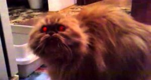 Demoniczny kot