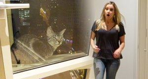 Żart z kotem wypadającym za okno