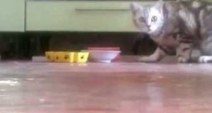 Kot che zjeść w spokoju