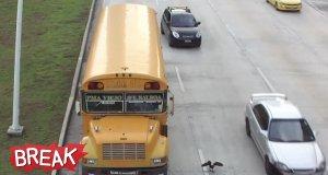 Ptak na ruchliwej autostradzie