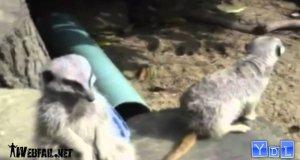 Kompilacja słodkich zwierzaków 2011