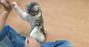 Tresowany kot