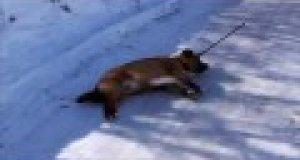 Pies, który nienawidzi zimy