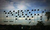 Ptasia melodia