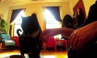 Świat oczami kota