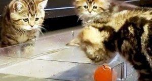 Kocie wodne polo