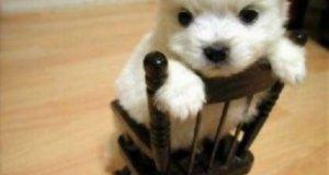 Słodkie zwierzaki