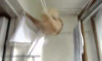 Kot myśli, że jest akrobatą