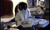 Kot odbiera telefon