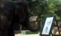 Słoń artysta