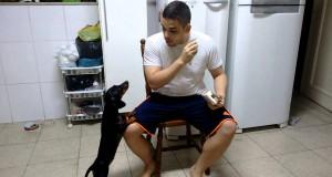 Jak dać psu lekarstwo?