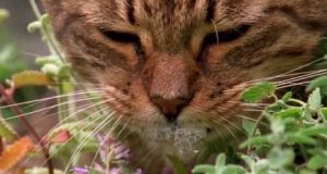 Naćpane koty