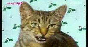 Śpiewające koty
