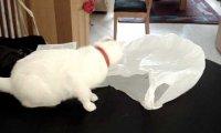 Dlaczego nie powinno zostawiać się kota z foliową torebką?