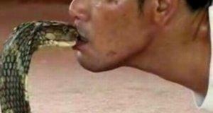 Pocałunek kobry