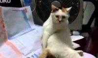 Kot drapie się po tyłku