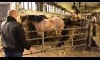 Koń wyczuł właściciela