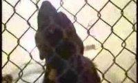 Dziwnie szczekający pies