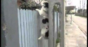 Pies ćwiczy wspinaczkę