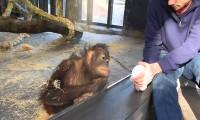 Małpa reaguje na