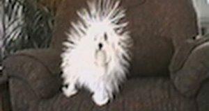 Naelektryzowany psiak
