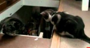 Jeden kociak pomaga drugiemu... spaść