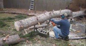 Martwe drzewo nie akceptuje swojego losu