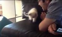 Kotek i powietrze