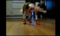 Kompilacja psów w butach