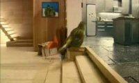Wnętrze ptasiej budki