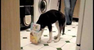 Psy i pudełka