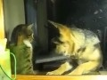 Bokserska potyczka psa i kota